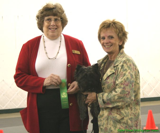 Kona, Cairn Terrier, Rally Novice title